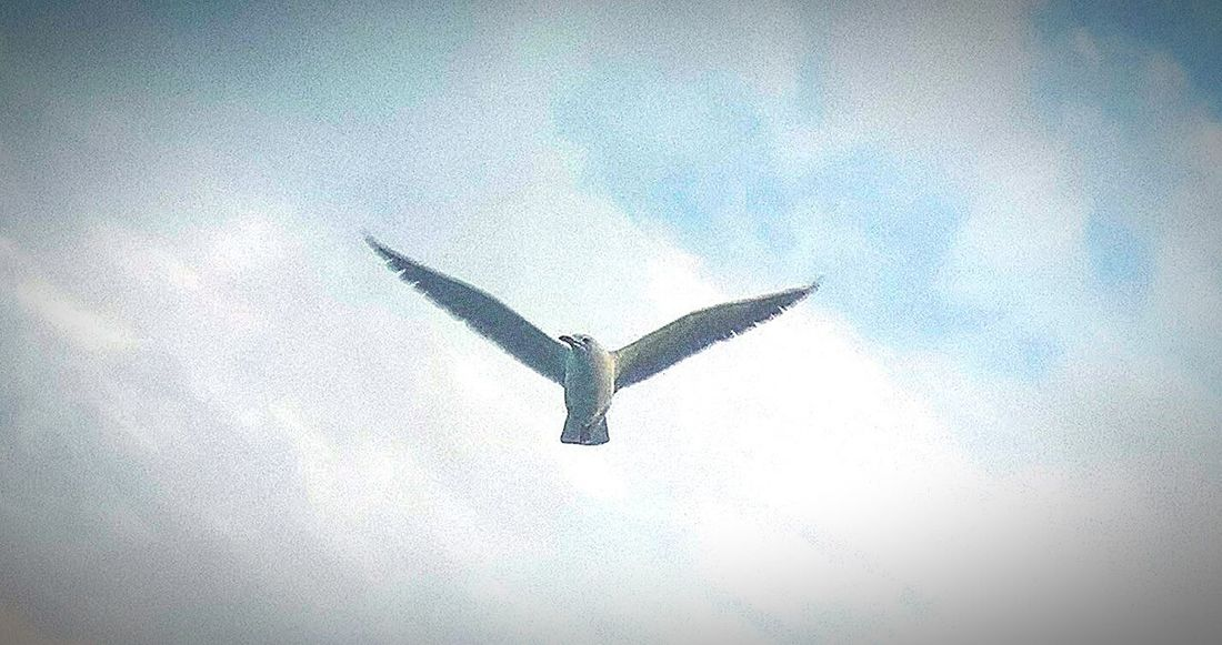 Flying Spread Wings Bird Animals In The Wild Animal Wildlife Low Angle View Sky River Cruise Day seagull