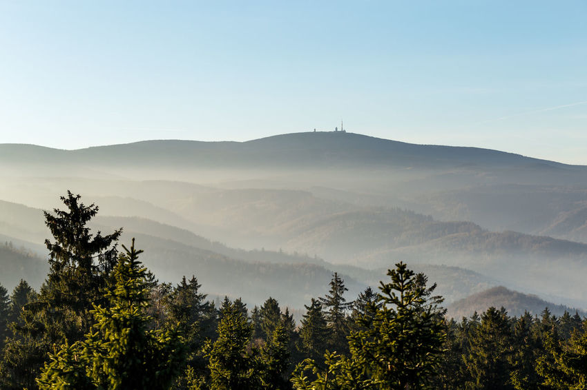 Tree Plant Scenics - Nature Beauty In Nature Mountain Sky Tranquil Scene Tranquility Nature Growth No People Non-urban Scene Idyllic Environment Copy Space Landscape Day Clear Sky Mountain Range Land Outdoors Coniferous Tree Brocken Harz Harzmountains