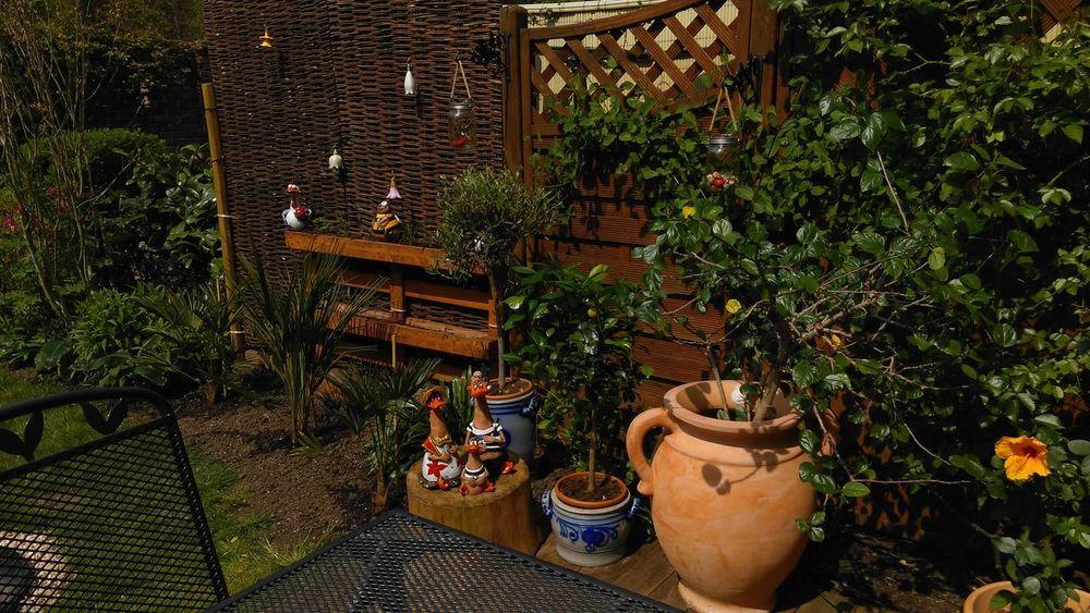 NoEditNoFilter Mygarden Home Hibiskus Oleander Hibiscus 🌺 Olivenbaum Olive Tree Mandarin Tree Palmen🌴 Komplett Complete Enjoying Life Showcase May Tadaa Community