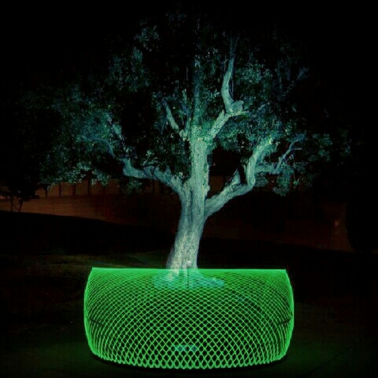 night, tree, green color, no people, outdoors