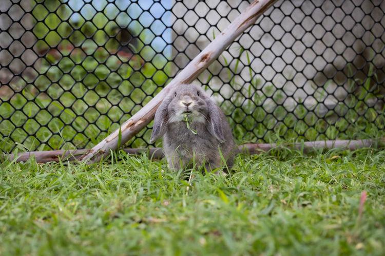 Cat seen through chainlink fence