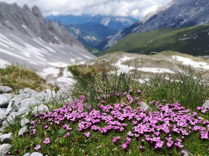 Purple flowering plants on field against mountains