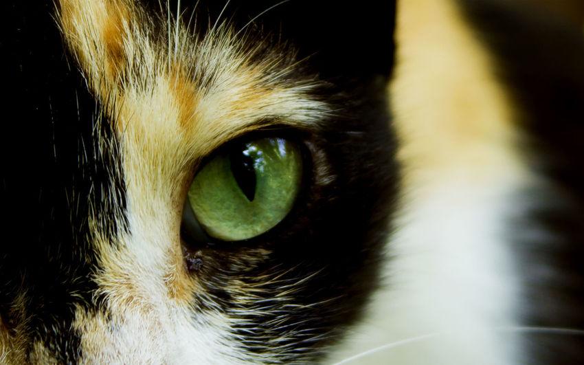 Cropped image of cat eye