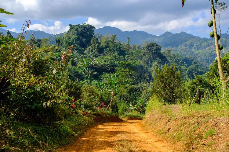 Small jungle