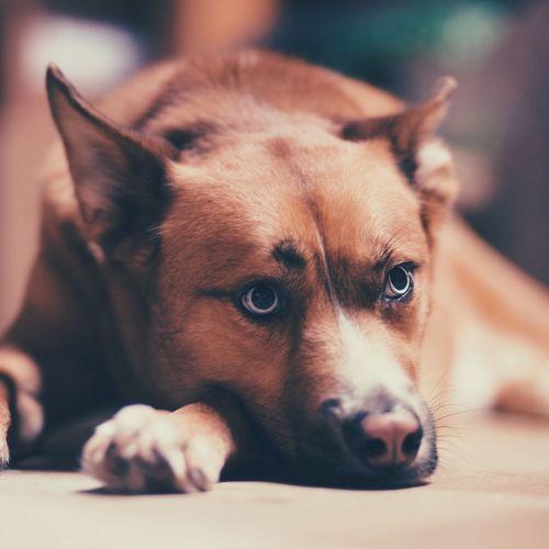 Cute Pets Cute Dog Pet Pet Portrait Mutt Eyes Blue Eyes Husky