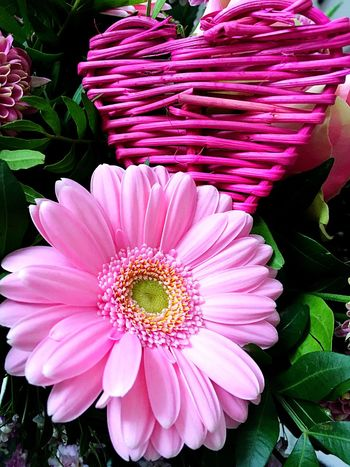 Valentine's Day  Flower Beauty In Nature Petal Freshness Growth Fragility Flower Head