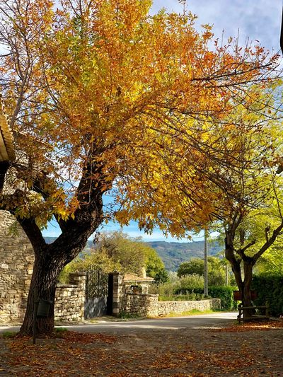Otoño Aragón Autumn colors Tree Plant No People Nature Day Beauty In Nature Autumn Leaf Branch Change Outdoors
