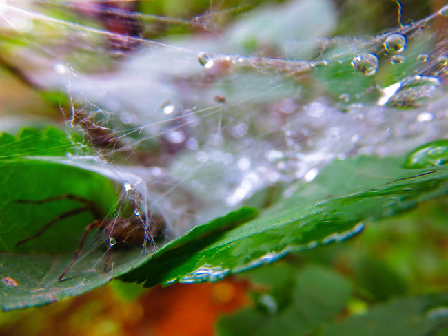 Perspectives On Nature Close-up No People Nature Freshness Beauty In Nature Day Water Spider Silk Spider Spider Nature_collection Eyenaturelover Spidersweb Rainy Days☔ Wet RainDrop Raindrops Insect Animals In The Wild Outdoors Rainy Day