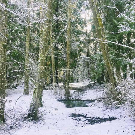 Cold Temperature Tree Winter Snow Forest Nature Beauty In Nature Outdoors No People Scenics Tranquility Weather Cold Tranquil Scene