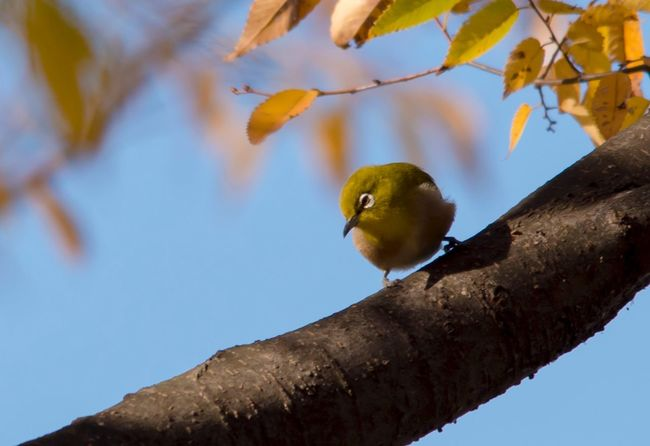 One Animal Animals In The Wild Bird Branch Perching Animal Wildlife Animal Themes Low Angle View Outdoors No People Tree Nature Day Beauty In Nature Close-up Sky