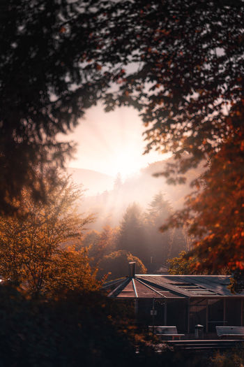 Tree Plant Sky Nature Architecture Sunset Beauty In Nature Sun Sunlight Built Structure No People Orange Color Scenics - Nature Autumn Tranquility Outdoors Building Exterior Change Tranquil Scene Growth Lens Flare