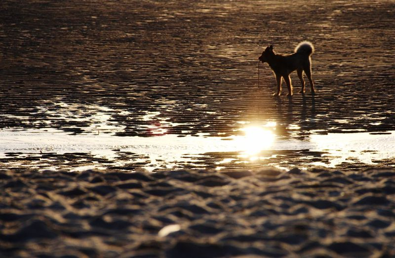 The Tourist Sylt, Westerland Nature On Your Doorstep Dogs Beachphotography Beach Sylt Strand Sun Sunset Sunshine