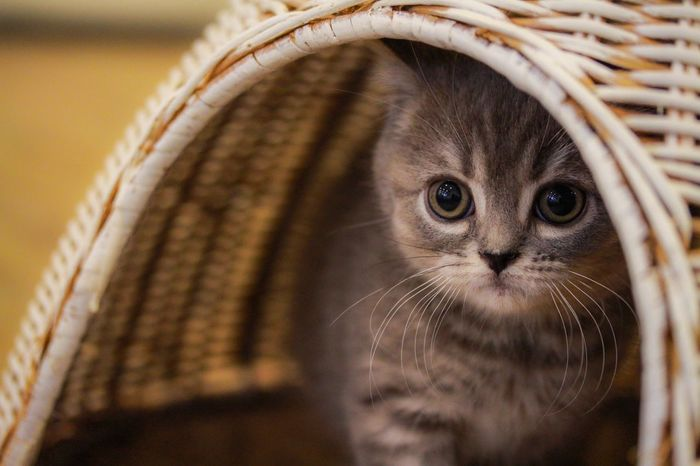 EyeEm Animal Lover Animal Photography Cat Kitty Cat Watching Babycat Catcafe Cute Cats Light And Shadow Animal Portrait