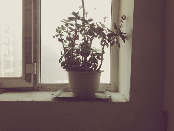 grandma house flower Life Flower Negative Space