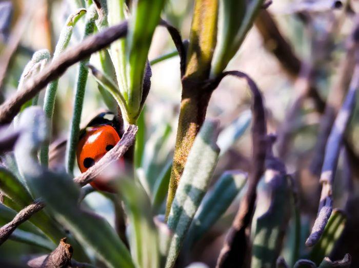 A ladybug is