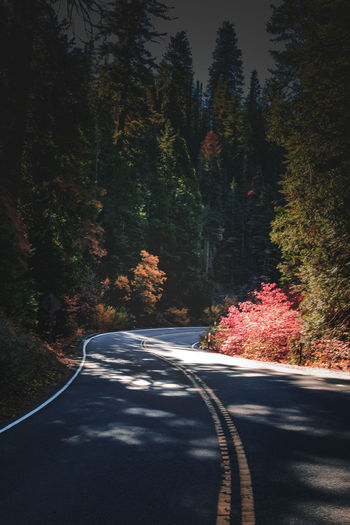 Scenic mountain region comprising the Sierra Nevada Range & Yosemite Valley of the Merced river; famous for giant sequoias, huge rock domes & peaks. Yosemite National Park Beauty In Nature Day Nature No People Outdoors Road The Way Forward Transportation Tree Winding Road