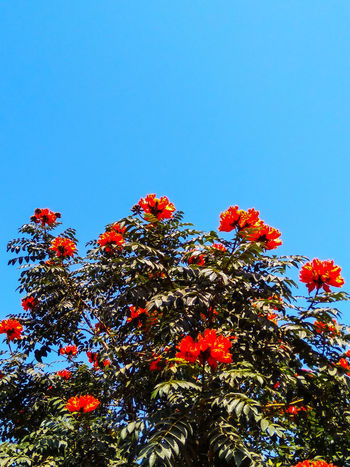 SPRING TIME... Low Angle View Nature Growth Day Clear Sky No People Sky Beauty In Nature Blue