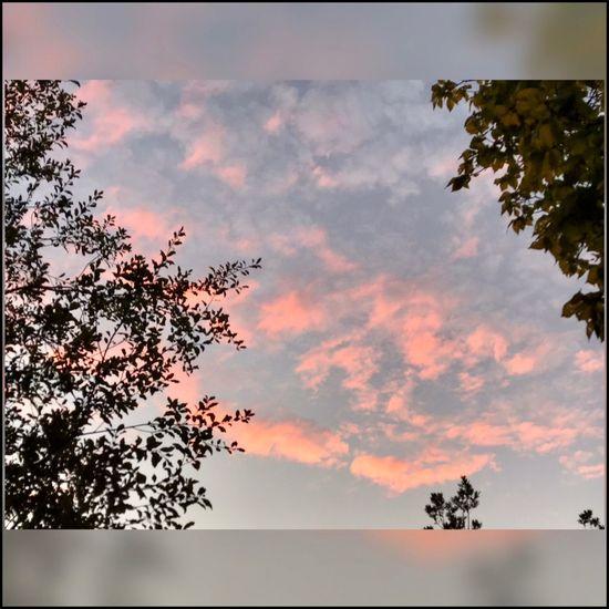 Autumn Sunset ☀️🍃☀️ Sunset Silhouettes