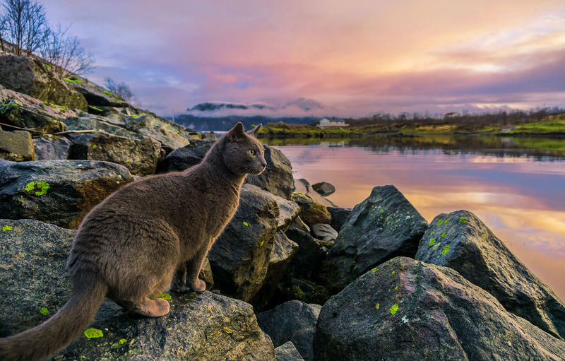 High angle view of animal in lake against sky