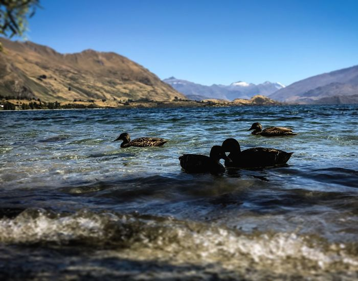 Mesmerised by nature love. Beautiful Beauty In Nature Clear Sky Couplegoals Couples Day Ducks At The Lake Lakeview Lakewanaka Landscape_Collection Loves Lovestory Mesmerized Mountain Nature Naturelovers Newzealandoutdoors No People Outdoors Sea Sky