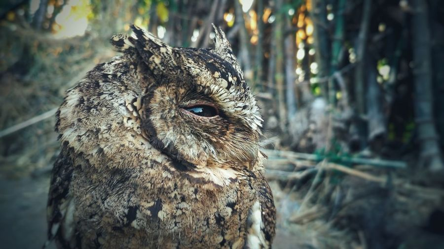 Owl Art Owl Owls Owl Photography Animals In The Wild Eye Animal Portrait Animal Wildlife One Animal Outdoors Nature Close-up No People Animal Themes Freshness Beauty In Nature Landscape Full Length Focus On Foreground EyeEmNewHere Backgrounds Beauty Nature EyeEm Selects