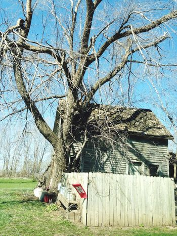 The Tree and the Barn