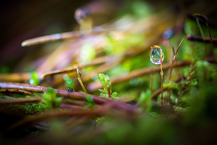 Backgrounds Beauty In Nature Close-up Day Dew Drops Drops Forest Fragility Growth Latvia Light And Shadow Mistic Morning Light Nature No People Photo Wallpapers Plant Plants Rain Secret WoodLand