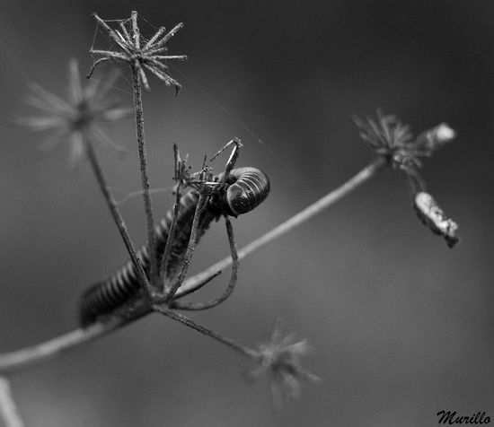 Insect Nature Animals In The Wild NikonD60 Nikonespaña Nikonphotography Insecto