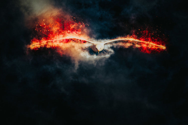 Art work of flames around bird
