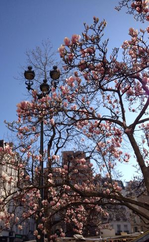 Street Lamp Monday Path To Spring FlowerBorn Collection
