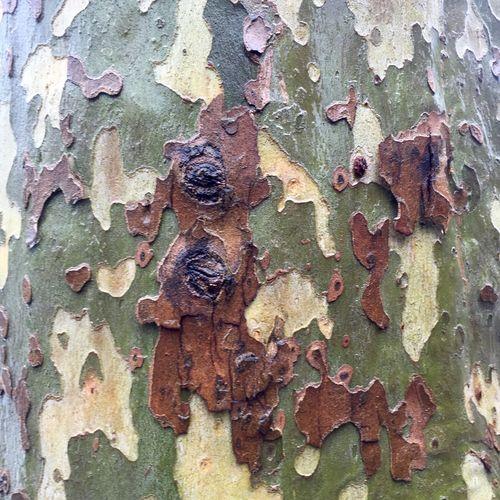 Nature Nature Pattern Tree Trunk Tree Hugger