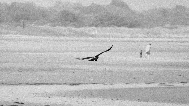 Beautiful Nature Beauty In Nature Best Edits  Bird Black & White Enjoy The Little Things EyeEm Best Edits EyeEm Best Shots - Nature EyeEm Nature Lover Flying Flying Bird Freedom From My Point Of View Hello World ✌ I LOVE PHOTOGRAPHY❤️ Liberty On The Beach Outdoors Preserve Nature Taking Photos Tranquil Scene Tranquility Wildlife