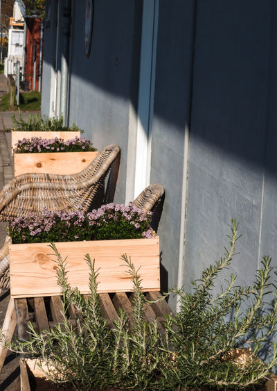 Box - Container Flower Growing Lavender Crate My Best Photo