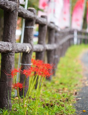 Been There. Red Focus On Foreground Day Outdoors No People Flower Nature Growth Beauty In Nature Close-up Fragility Grass Freshness Done That.