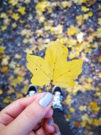 EyeEmNewHere Leaf Human Hand Autumn Human Body Part One Person Holding Focus On Foreground Human Finger Close-up Day Outdoors Nature