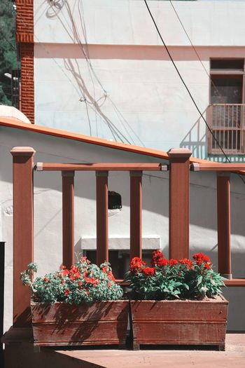 Potted plants by railing of building