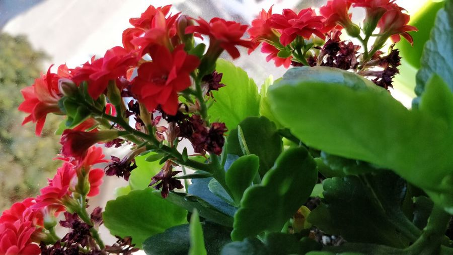 Flower Growth Nature Plant Beauty In Nature No People Green Color Day Freshness Fragility Leaf Close-up Flower Head Red Flower Oneplusfive Oneplusphotography EyeEmNewHere