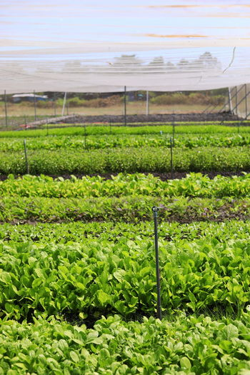Growth Plant Green Color Field Nature Land Beauty In Nature Day No People Outdoors Farm Ecology Green Watering Plants Freshness Vegetable Agriculture Crop  Greenhouse Landscape Rural Scene Plant Nursery Environment Gardening