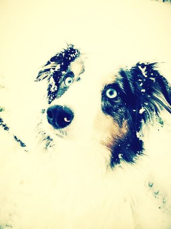 My Dog named Blue