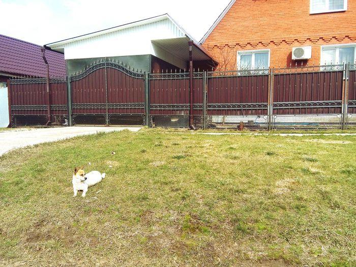 Вот такую прелесть видеоа по дороде домой) весна собачка Хорошеенастроение травка ✌️😘😚😽