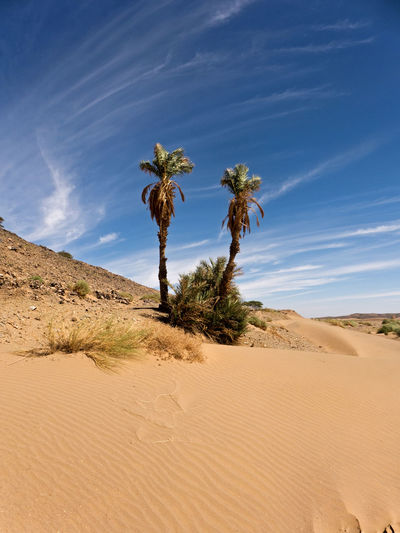 The Sahara desert in the south of Morocco near Tafraout. Land Landscape Climate Scenics - Nature Desert Environment Arid Climate Sky Sand Beauty In Nature Non-urban Scene Nature Tranquil Scene Tranquility Outdoors Morocco Sahara Dry Hot Africa Trekking Hiking Palm Tree Plant No People