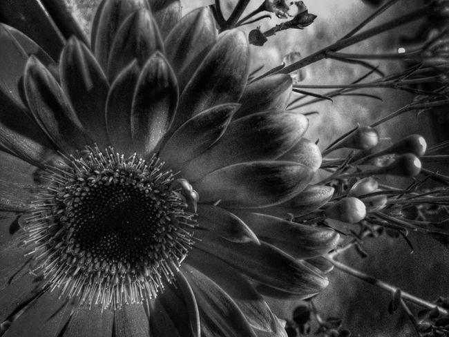 Blackandwhite Monochrome Flowers