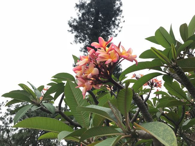 Plant Growth Plant Part Leaf Low Angle View Beauty In Nature Nature Freshness Day Tree Flower Fragility No People Outdoors Flowering Plant Green Color Sky Vulnerability  Botany Close-up