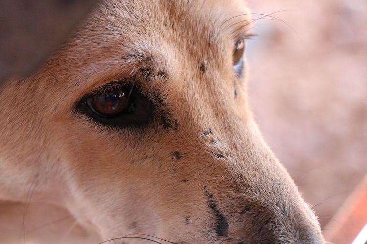 Mammal Close-up