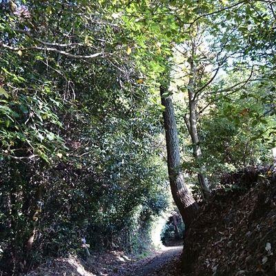 Hidden corridor Kyoto Corridor Nature