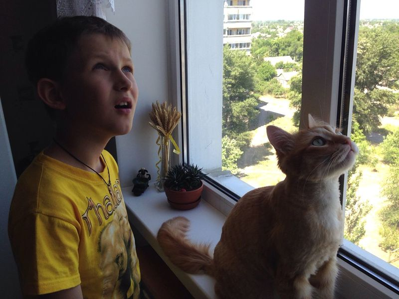 Cat Afonsiko рыжий кот Афоня Áfonya Frends Cats Cat♡ Children