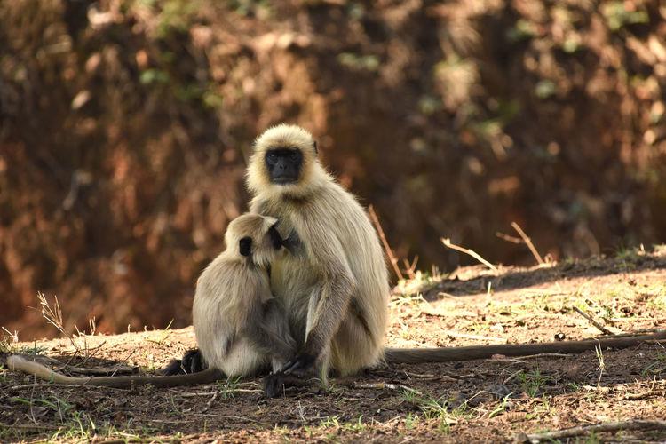 Lunch time. Mom & Baby Animal In Wild Animal Photography Animal Themes Feeding Time Forest Monkey Monkey Feeding