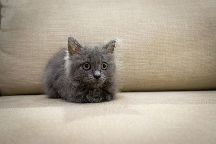 Portrait of kitten on sofa