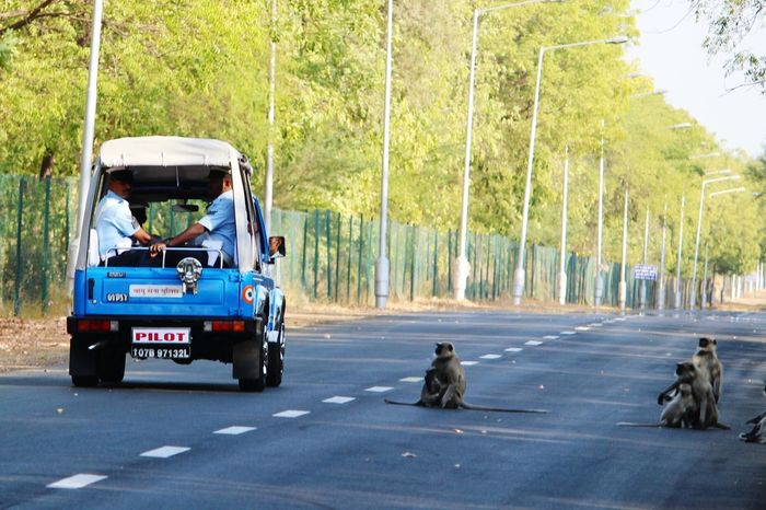 Showcase: February Airforce Monkeys Staring Lonely Road Check This Out Moment_oftheday Gypsy Jeep Indian Officers