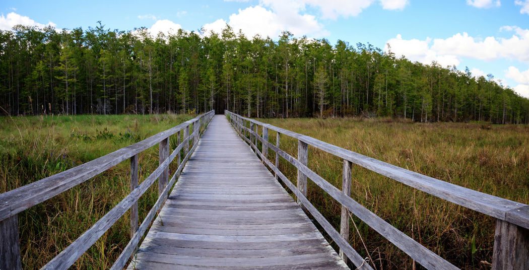 Boardwalk path at Corkscrew Swamp Sanctuary in Naples, Florida leads to a Thick wall of pond cypress trees Taxodium distichum var nutans. Corkscrew Swamp Sanctuary Marsh Nature Swamp Taxodium Distichum Var Nutans Travel Trees Beauty In Nature Boardwalk Cloud - Sky Day Forest Growth Journey Nature No People Outdoors Pond Cypress Scenics Sky Taxodium Distichum The Way Forward Tranquil Scene Tranquility Tree